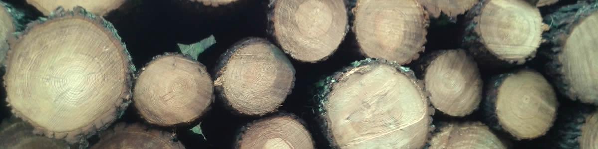Gestion forestière Landes